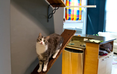 Upload of the Day: Catwalks Keep Pets Happy in a Candy-Colored Condo
