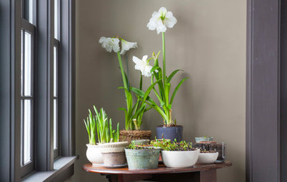 Simple Pleasures: Grow a Cheery Indoor Garden