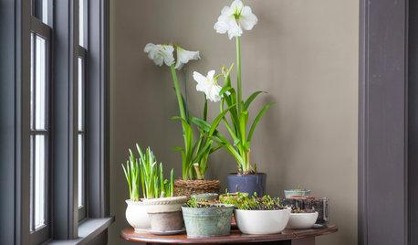 Simple Pleasures: Grow a Cheery Indoor Garden