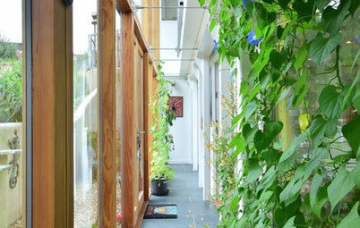 Healthy Home: How to Go Green With a Living Wall or Roof