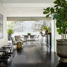 Plant Profile: Fiddle-Leaf Fig