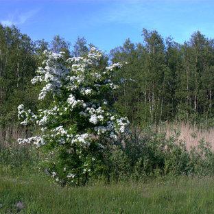 Inspiration för nordiska trädgårdar