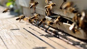 Female Choice Pest Control Adelaide
