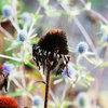 7 Gründe, warum Sie Ihren Garten im Herbst in Ruhe lassen sollten
