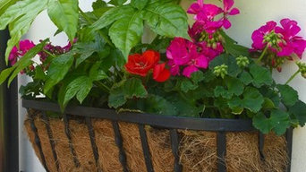 Window Boxes in May