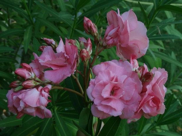 Rboles y arbustos para el dise o de jardines peque os for Jardines con arboles y arbustos