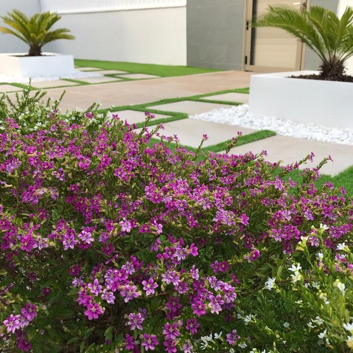 Jardín en La Barrosa