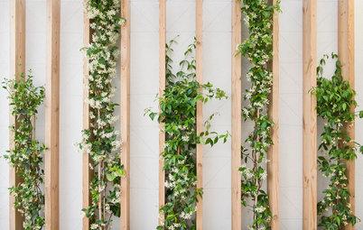 Les plantes investissent les murs intérieurs avec originalité