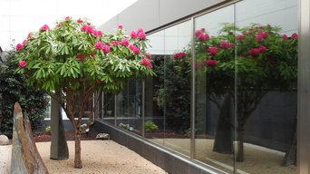 Rododendro ejemplar. JARDINES Centro Hospitalario Benito Menni. VALLADOLID