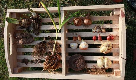 Planta ahora narcisos y tulipanes para disfrutarlos en primavera
