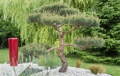 Creer un coin zen dans son jardin awesome arbustes for Coin zen dans jardin