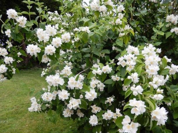 Arbuste Pour Petit Jardin Amazing Arbre Feuillage