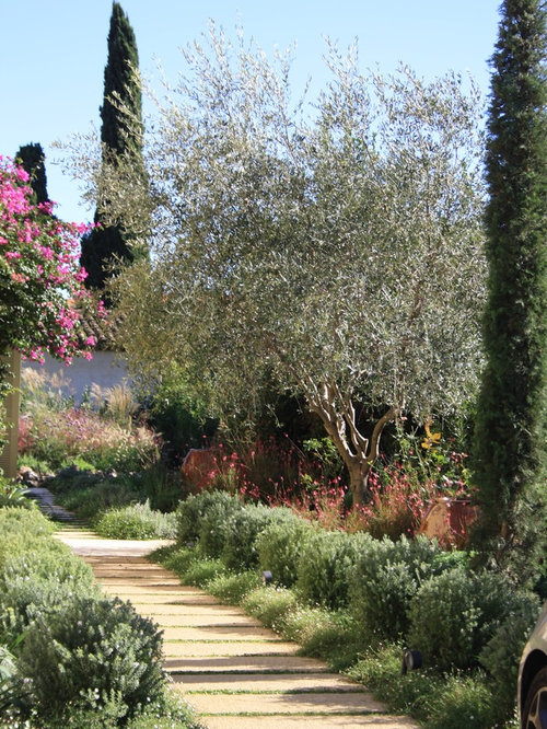 Photo Of A Mediterranean Landscaping In Other.