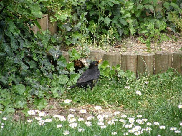 apprenez reconna tre les oiseaux du jardin. Black Bedroom Furniture Sets. Home Design Ideas