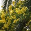 ¿A qué huele tu jardín? 10 plantas que perfuman todo el año