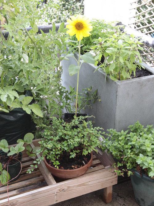 Jardin campagne france photos et id es d co de jardins - Deco jardin campagne ...