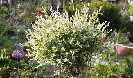 Quel arbuste planter dans un petit jardin ?