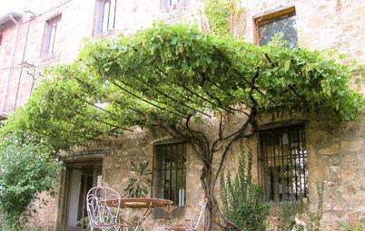 Piante Rampicanti per Giardini (o Balconi) Segreti