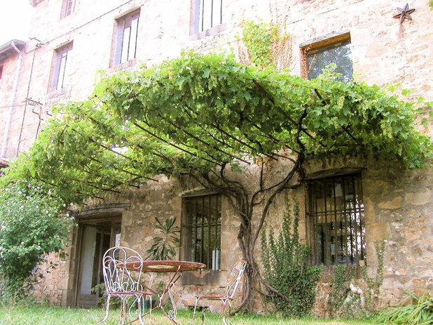 Guida houzz piante rampicanti per giardini o balconi for Piante sempreverdi da balcone