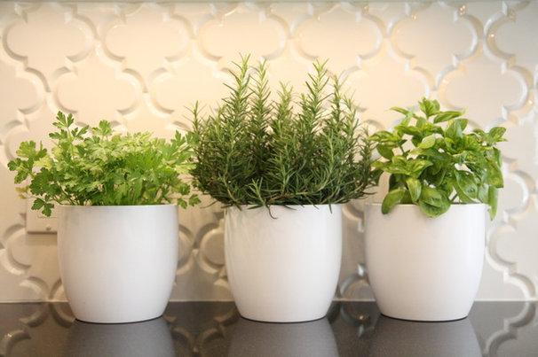cultivez plantes aromatiques et salades dans votre cuisine. Black Bedroom Furniture Sets. Home Design Ideas