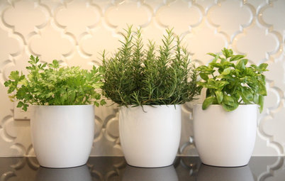 Savoury Six: Herbs to Jump-Start Your Edible Garden