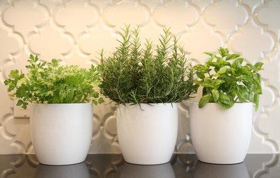 Cultivez plantes aromatiques et salades dans votre cuisine !