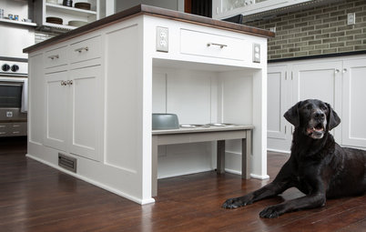 Pet-Friendly Design: Making Room for the Dog Dish