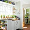 Odla kryddväxter i köksfönstret – så lyckas du