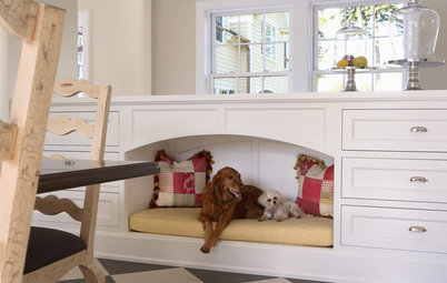 5 Pet Problems Solved by Design