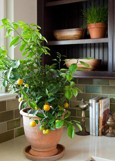 Современный Кухня by Lauren Liess Interiors