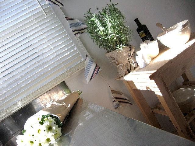 Indoor Gardening: Herbs and Succulents