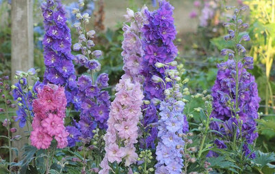 6 New Plant Varieties That Beat Out Their Parents
