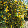 Tidy Up Sprawling Native Shrubs With These Pruning Tips