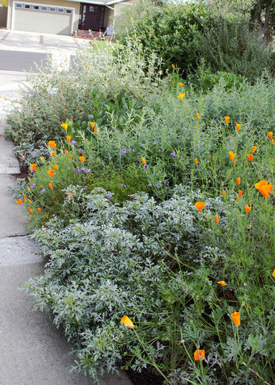 Native plants bring 10 southern california front yard for Southern california native plants