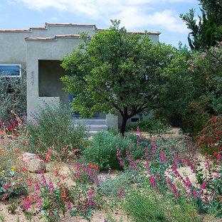 Modern garden in Los Angeles.