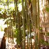 竹の基礎知識から、竹垣のメンテナンス方法まで。竹を知り、竹を使おう!