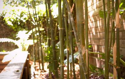 「竹」を使って、風情ある庭に。竹垣の作り方、手入れ法、寿命は?