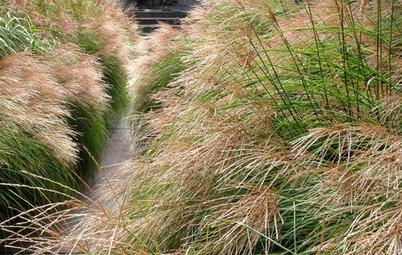 Lassen Sie Gras drüber wachsen! Basics zum Gräsergarten