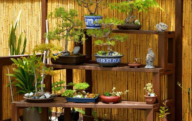 Asian Garden by Jesse Im/bugonmyleaf