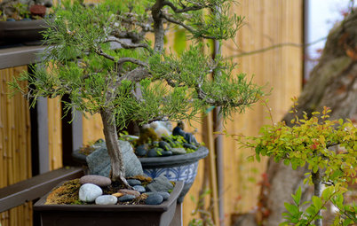 Little by Little: Why Growing a Bonsai Could Change Your Life