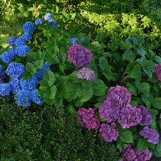 Traditional Landscape A blue garden