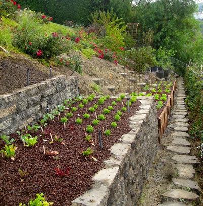 6 astuces pour cultiver des l gumes sur un terrain en pente for Amenagement jardin 2000m2