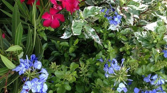 A Few of Our Plant Offerings