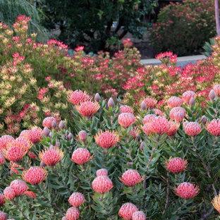 Mediterraner Garten in San Luis Obispo
