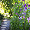 My Houzz: A Sun-Dappled Oasis on Whidbey Island