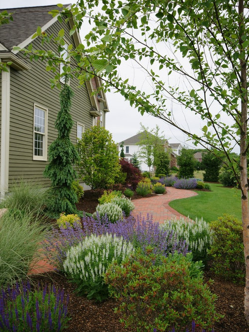 Weeping white spruce houzz for Weeping garden trees