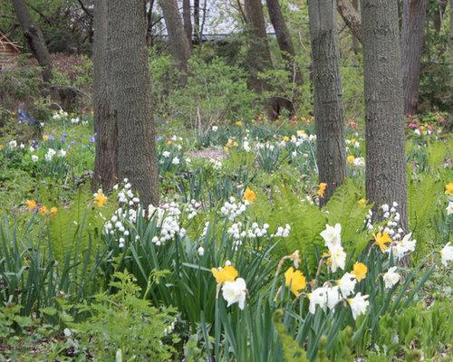 Woodland Garden Houzz