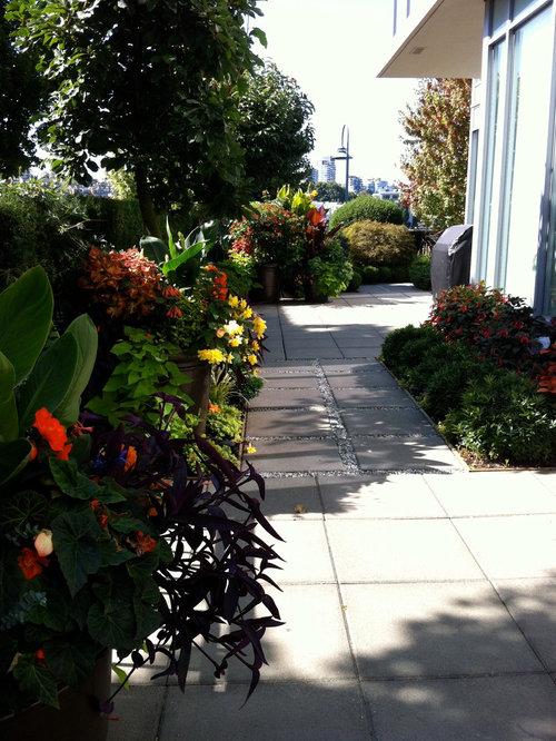 A Modern Tropical Garden 2012