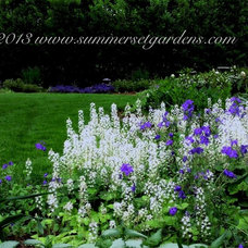 Traditional Landscape by Summerset Gardens/Joe Weuste