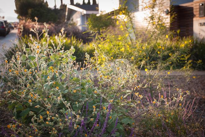 Landscape by Oakley Gardens